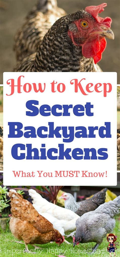 2090 Best Posts By Imperfectly Happy Homesteading How To Keep Chickens In Your Backyard