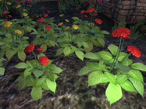 Ginseng Planter by Image Ginseng Plant Png The Elder Scrolls Wiki