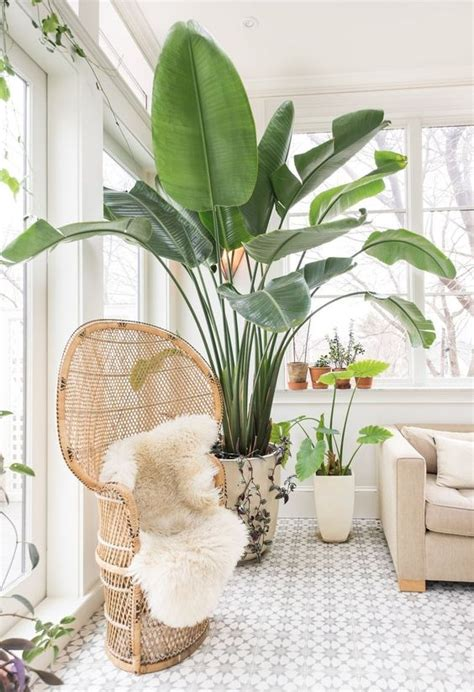 Apartment Therapy Air Plants Improve Your Home S Air Quality With These Fresh Air Ideas
