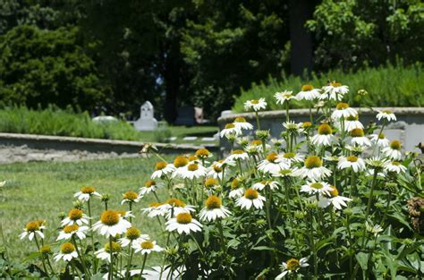 Bellefontaine Gardens by Bellefontaine Cemetery Wants To Bury You In Its Garden