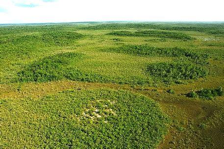 abiotic  biotic factors tropical grasslandssavannas
