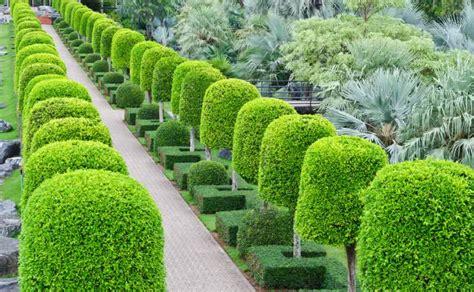 landscape design importance of lines in landscape gardening landscape elements