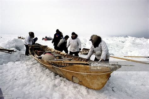 umiak boat an umiak a type of boat used by the inuit alaska stock