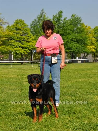 evman rottweilers puppies rkna sieger show 2012 show photo s