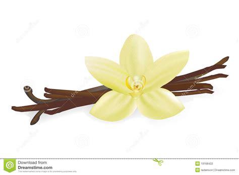 fiore della vaniglia baccelli e fiore della vaniglia fotografia stock
