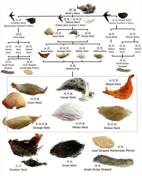 edible birds nest types of edible birds nests swift