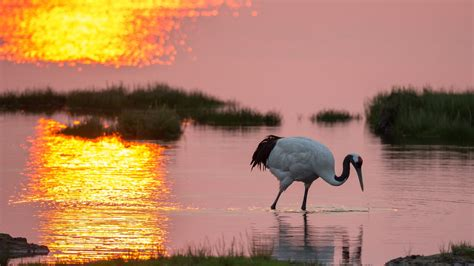 nature animals sunset water birds wallpapers hd