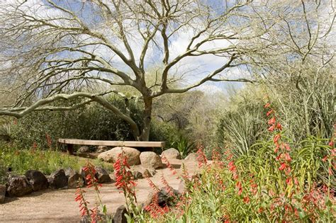 southwestern landscaping calimesa ca photo gallery