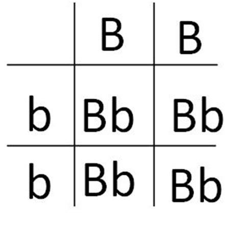 punnett square for eye color punnett square eye color www pixshark images