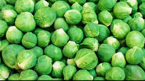3 vegetables to never eat check out these vegetables which you should never eat