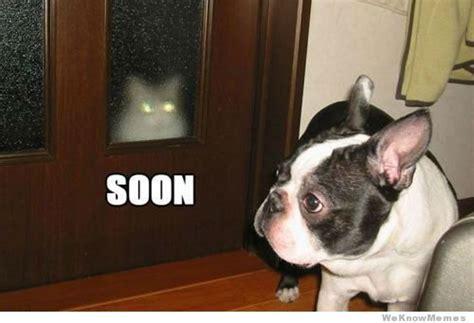 Soon Cat Meme - dog cat soon meme