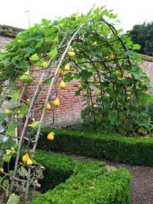 Kitchen Garden Arbor Gourd Arbor Garden Ideas