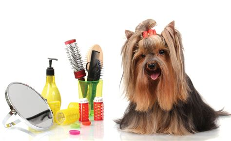 dog house groomers dog grooming basics tips and techniques pets world