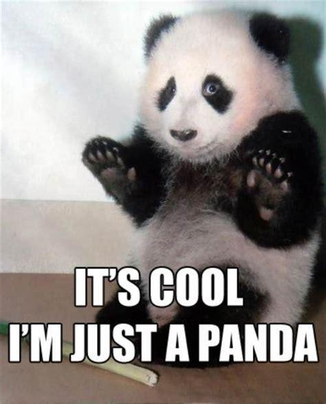 Funny Panda Memes - community post it s cool i m just a panda panda