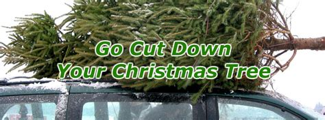 where to buy a christmas tree near me where to buy a tree near lancaster pa