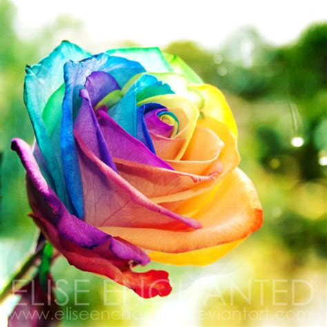 rainbow colored roses color photography rainbow image 345651 on favim