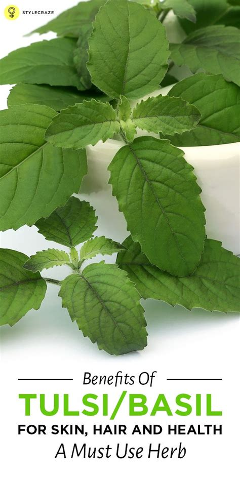 Tulsi Basil To Cure Skin Problems by Holy Basil Benefits For Your Health Skin And Hair