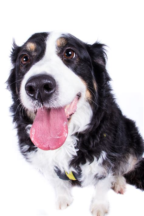 free neutering for dogs dogs trust promote neutering scheme for farm dogs