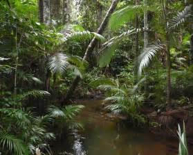 le forest file archontopheonix alexandrae littoral rainforest jpg