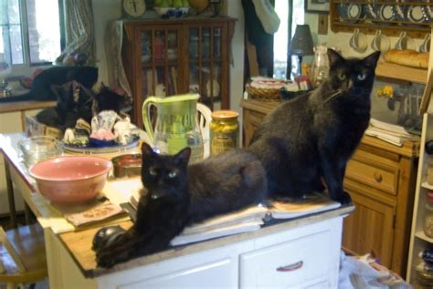 Cat Kitchen by Daily Photo I Will Now Be Managing Your Kitchen The