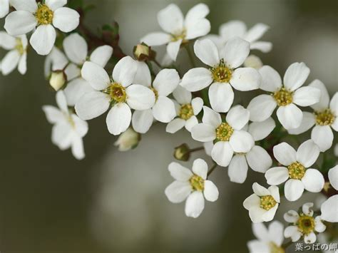 s3 wallpaper flower name 100 types of the most beautiful white flowers for your