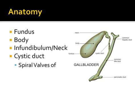 fundus of gallbladder the gallbladder gallstones and beyond ppt video