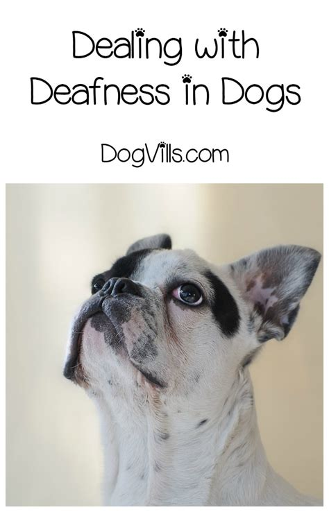 how to tell if your puppy is deaf how do i if my is going deaf how can i help