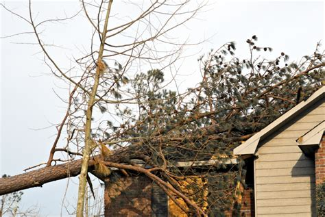 home insurance and fallen trees wind fallen trees and your homeowners insurance