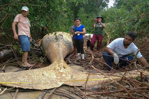 Amazon Hutan