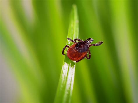 Lyme disease is on the rise: Here?s how to protect your kids from ticks   Today's Parent