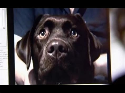 can dogs sense the true story of dogs pbs documentary discovery science animals documentary