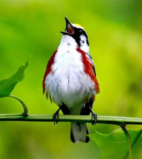 why do birds chirp in the morning wildlife quora
