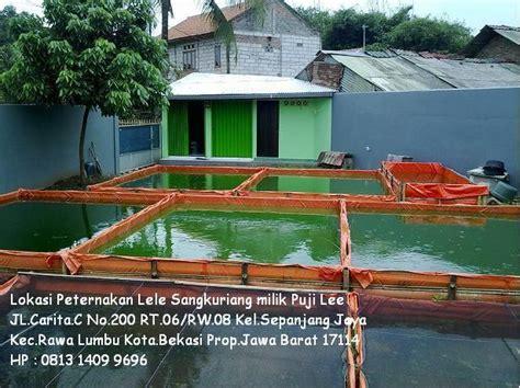 Bibit Lele Karawang lokasi peternakan lele sangkuriang puji bekasi