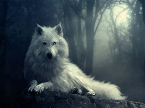 cool wallpaper of wolves wolf pictures wallpapers wallpaper cave