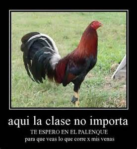 gallos con frases gallos orgullo mexicano pinterest