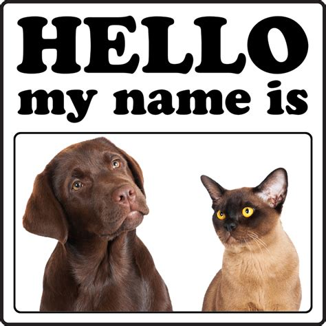 Top 10 Pet Names For Cats by Top 10 Most Popular And Cat Names Of 2013