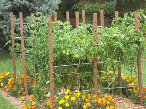 backyard tomato garden beautiful tomato garden 8 tomato garden trellis ideas
