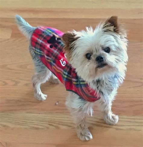 6 lb yorkie fleece plaid coat pullover for small dogs teacup yorkie maltese chihuahua