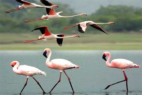 what birds migrate to and from india quora