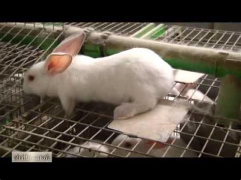 alimentazione dei conigli la corretta alimentazione coniglio doovi