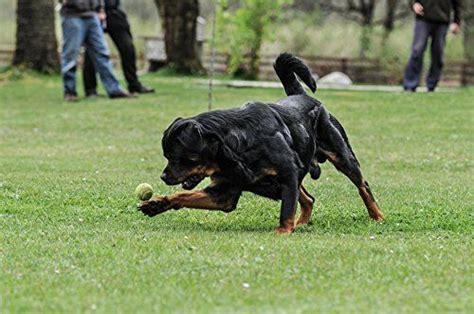muscular rottweiler rottweiler formula mass builder rotties dobes shepherds labs and other