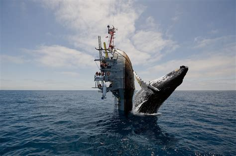 Cruise Ship Sinking by Flip Ship Photoshop Battle Deep Sea News