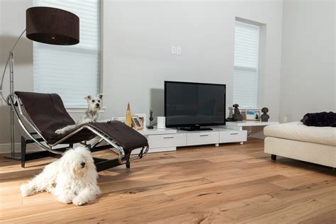 Living Room Flooring For Dogs Wire Brushed Hickory Ability Wood Flooring
