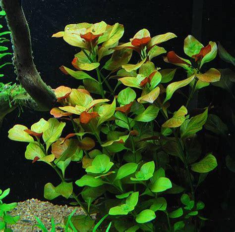 Aquascape Plant Live Aquarium Plants Package 8 Easy Aquatic Species