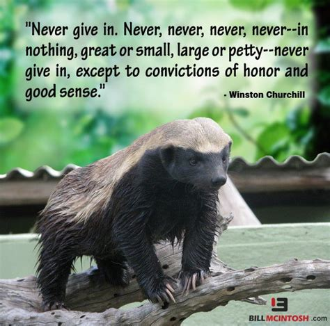 honey badger dont quit  give  motivation life quotes inspirational quotes quotes