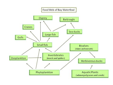 food web flowchart food chains food webs and energy pyramids gateway