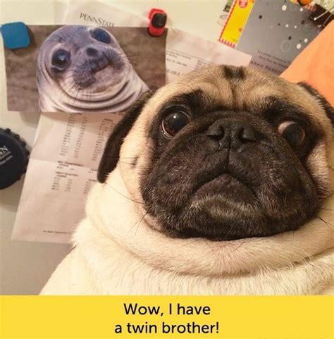 That Face You Make When Meme