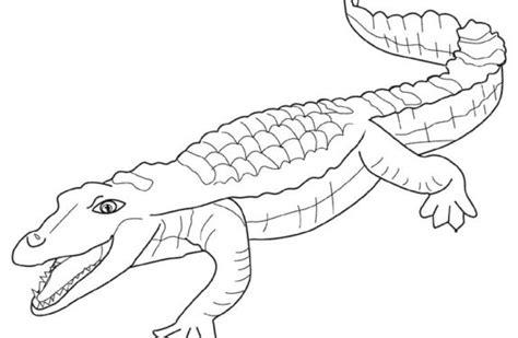 imagenes animales salvajes para colorear dibujos para colorear animales salvajes iguana dibujos