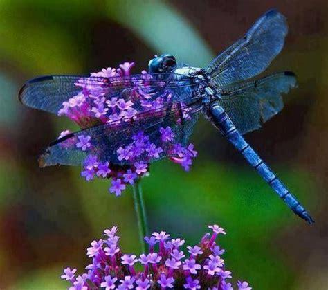 dragonfly garden dragonfly welcome to my garden gardens