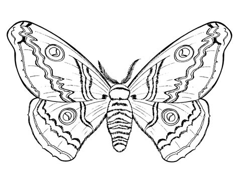 pages images insects coloring pages printable